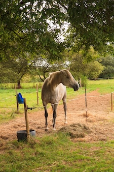 Vista do cavalo