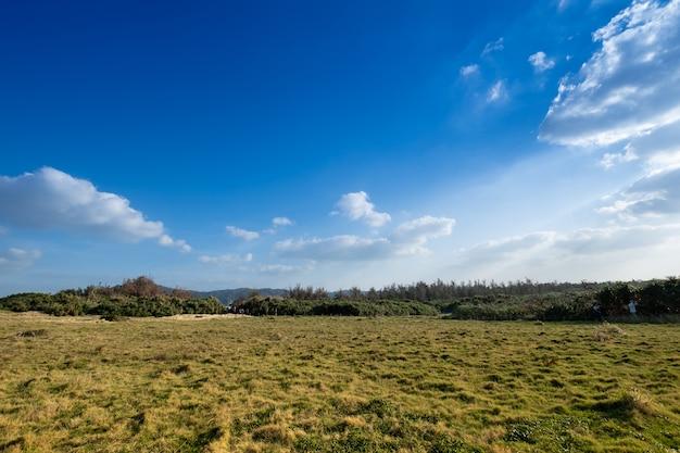 Vista do cenário, o céu azul e nuvens com o campo verde e planta no chão