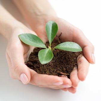 Vista do close-up de mãos segurando sujeira e planta