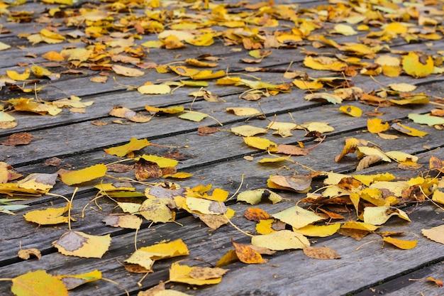 Vista do close-up de uma plataforma de madeira coberta com folhas douradas caídas.