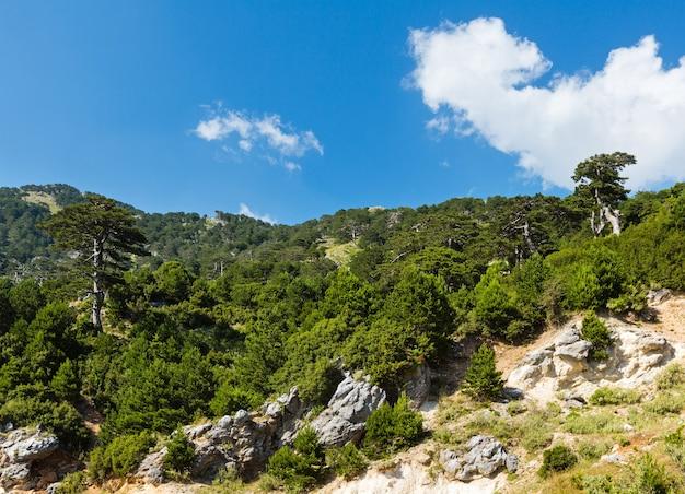 Vista do desfiladeiro summer llogara com pinheiros na encosta da montanha (albânia)