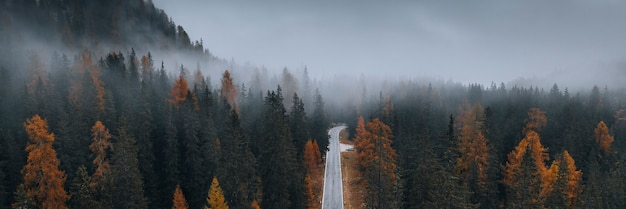 Vista do drone de uma floresta enevoada de coníferas no outono