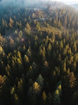 Vista do drone do parque whinlatter forest no lake district, na inglaterra