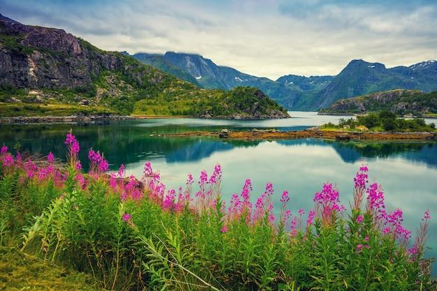 Vista do fiorde. litoral rochoso com reflexo, céu azul nublado e flores cor de rosa desabrochando. bela natureza da noruega.