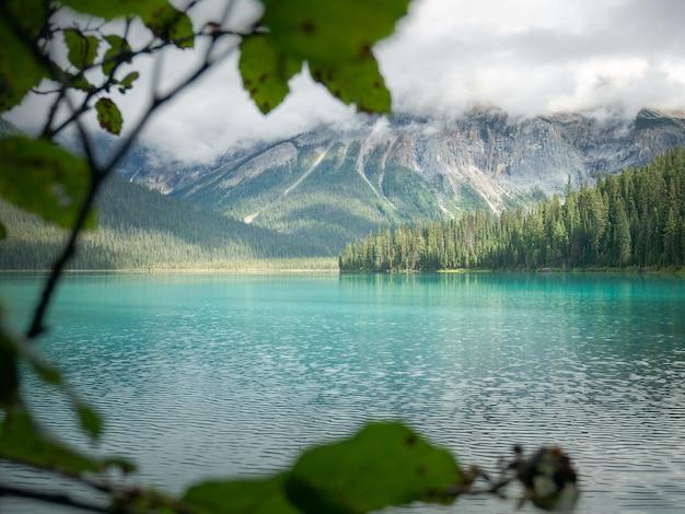Vista do lago da montanha por meio da folhagem
