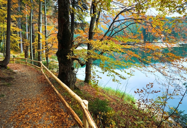 Vista do lago da montanha synevir através dos galhos das árvores no outono