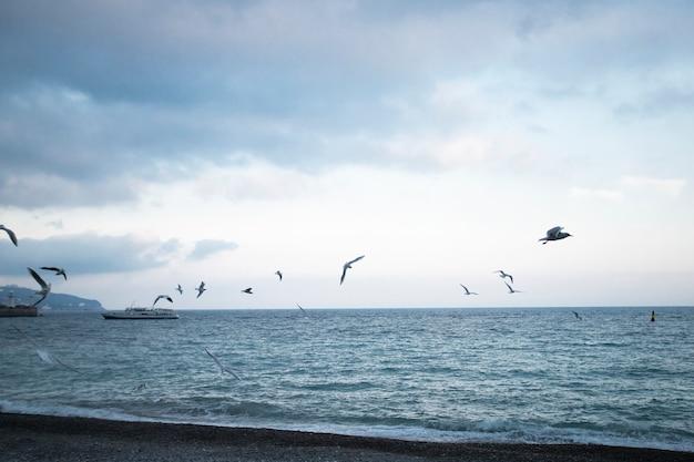 Vista do mar com gaivotas voando e navio passando