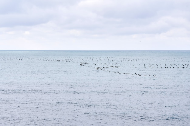 Vista do mar com um bando de pássaros migratórios voando baixo acima da superfície da água
