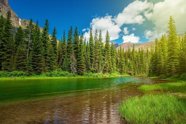 Vista do parque nacional glacier, pinheiros de inverno em montanhas rochosas