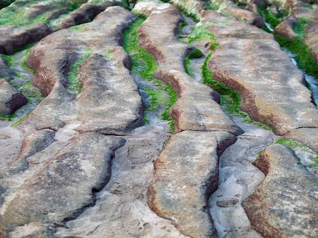 Vista do recife verde de laomei (calhas de pedra) na cidade de new taipei. algas verdes no sulco do mar (vala de erosão do mar) somente em abril e maio.