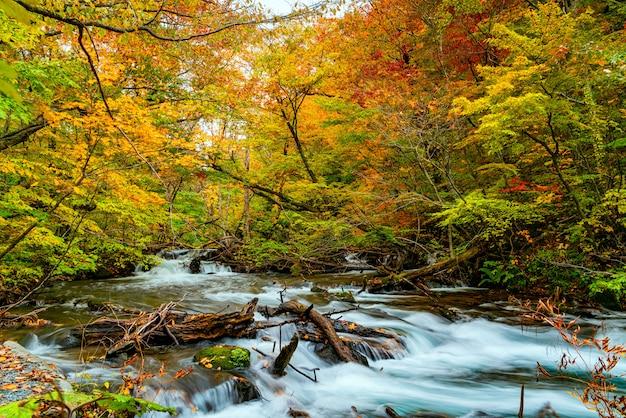 Vista do rio oirase flui através da floresta de folhagem de outono colorida e rochas cobertas de musgo verdes