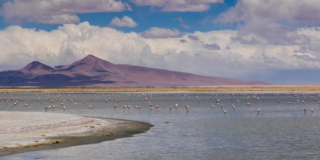 Vista do salar de tara, reserva nacional los flamencos, san pedro de atacama, província de el loa, antof