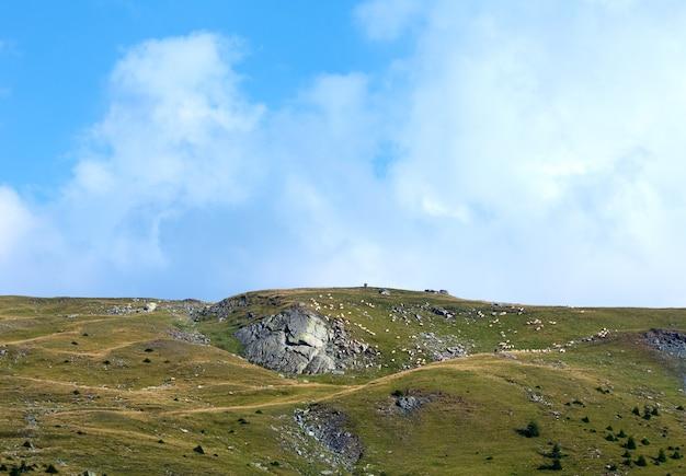 Vista do verão da estrada transalpina com rebanho de ovelhas na encosta.