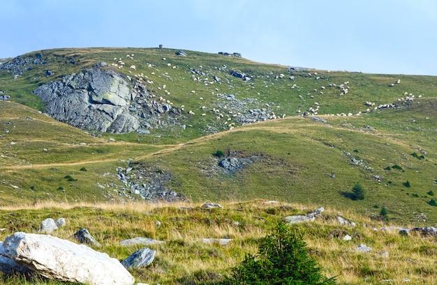 Vista do verão da estrada transalpina e rebanho de ovelhas na encosta.