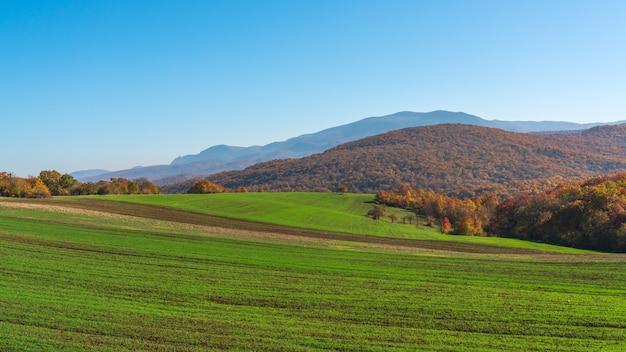 Vista dos campos agrícolas com brotos verdes