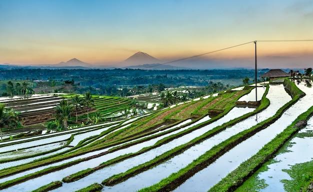 Vista dos terraços de arroz jatiluwih em bali, indonésia