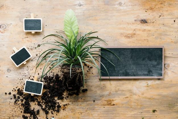 Vista elevada da planta verde com estaca em branco e ardósia na placa de madeira