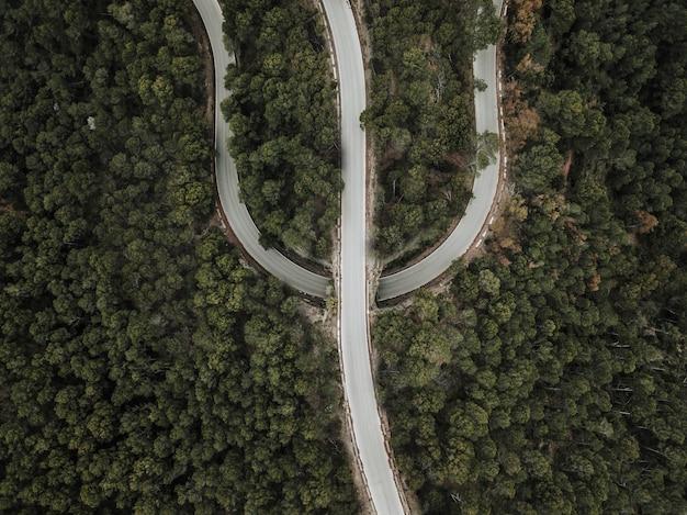 Vista elevada, de, estrada, entre, árvores