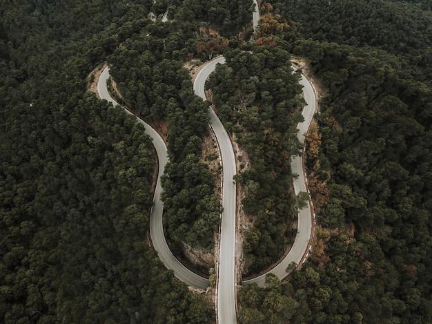 Vista elevada, de, estrada sinuosa, em, floresta