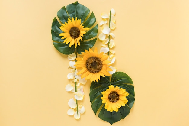 Vista elevada, de, fresco, girassóis, ligado, monstera, folhas, com, branca, pétalas, sobre, amarela, fundo