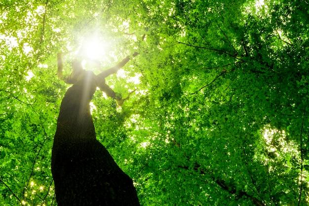 Vista em perspectiva de uma árvore da floresta de cima