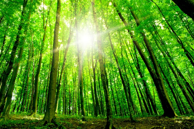 Vista em perspectiva de uma árvore da floresta