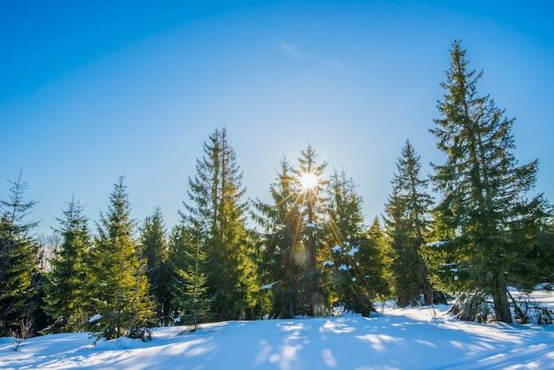 Vista encantadora da pista de esqui com uma bela vista da floresta de coníferas do morro nevado