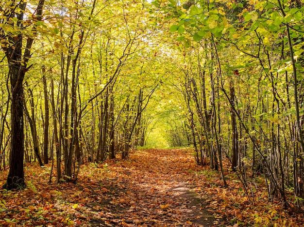 Vista ensolarada do outono de um caminho de floresta coberto com folhas caídas.