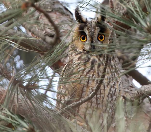 Vista expressiva de uma coruja-pequena em um fotógrafo de uma árvore