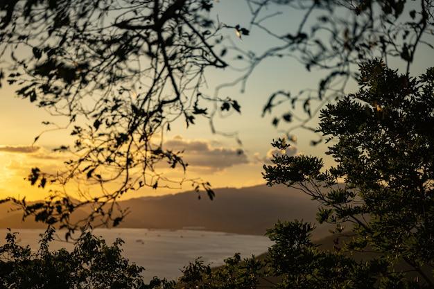 Vista fantástica de brunches em árvores tropicais com um pôr do sol brilhante no fundo.