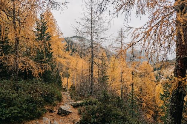 Vista fantástica de uma trilha estreita na floresta rochosa cercada por uma densa folhagem colorida de outono