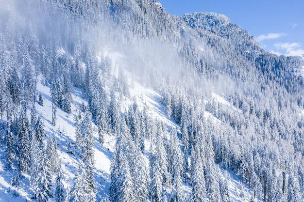 Vista fascinante de belas árvores cobertas de neve