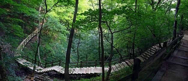 Vista fascinante de escadas de madeira em uma bela floresta com natureza exuberante
