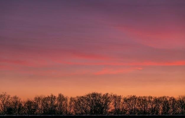 Vista fascinante do céu durante o pôr do sol atrás dos galhos de uma árvore