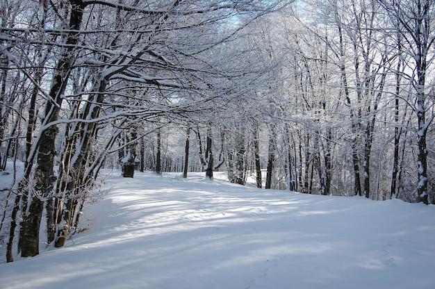 Vista fascinante do parque coberto de neve no inverno