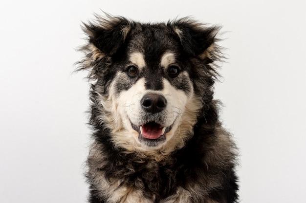 Vista frontal bonito cão com língua de fora