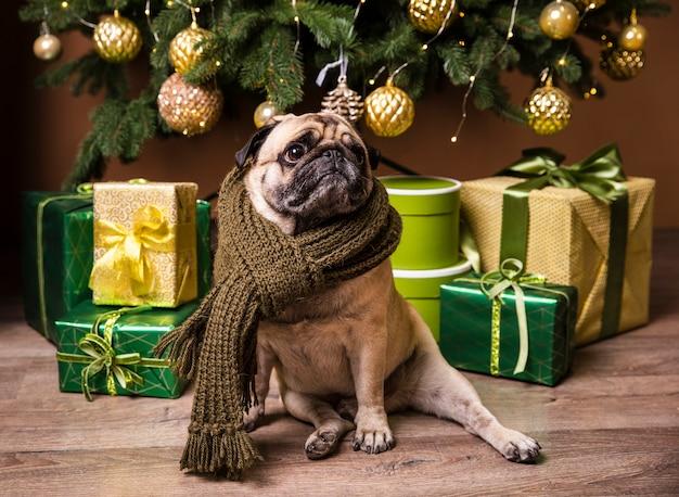 Vista frontal bonito cão em pé na frente de presentes