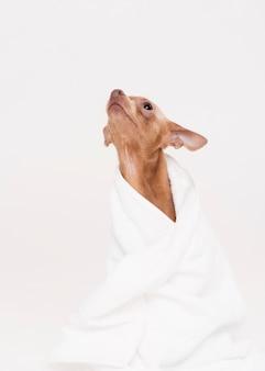 Vista frontal bonito cão sentado na toalha