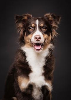 Vista frontal bonito cão sentado