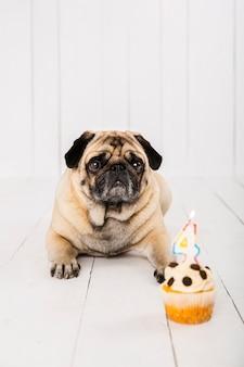 Vista frontal cachorro e bolo para sua comemoração do quarto ano