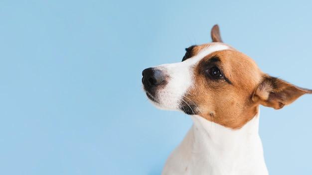 Vista frontal cão amigável cópia-espaço