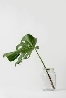 Vista frontal conceito botânico com espaço de cópia
