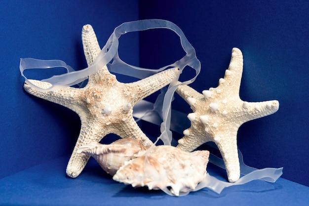 Vista frontal da estrela do mar com concha de plástico e mar