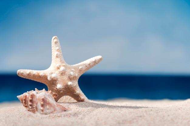Vista frontal da estrela do mar e concha do mar na praia