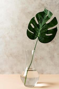 Vista frontal da folha tropical em um vaso
