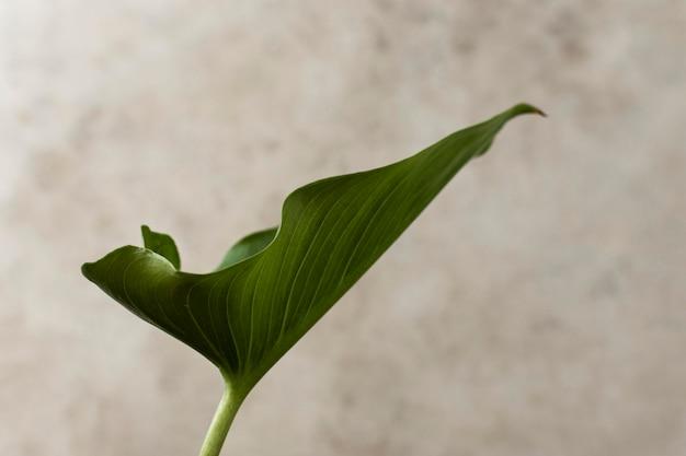 Vista frontal da folha tropical