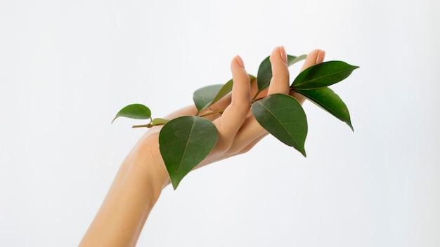 Vista frontal da mão segurando folhas