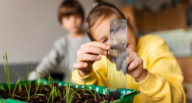 Vista frontal da menina medindo brotos crescendo em casa