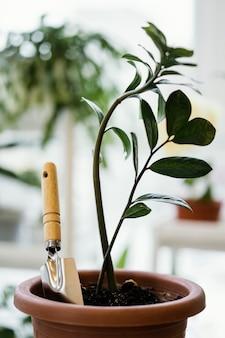 Vista frontal da planta de interior em vaso com espátula
