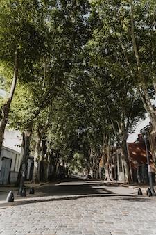 Vista frontal da rua da cidade com árvores e edifícios